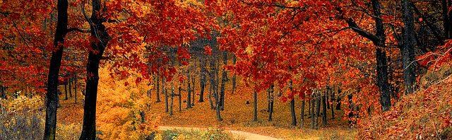 Musings On Fall